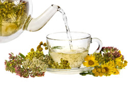 Травяной чай для щитовидки