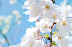 Весна - время различных заболеваний