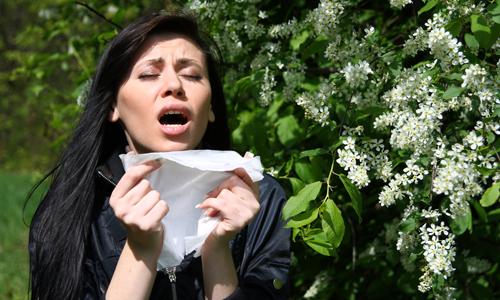Проблема аллергии на цветение