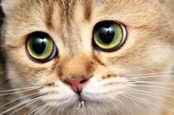 Шерсть животных - одна из причин аллергии