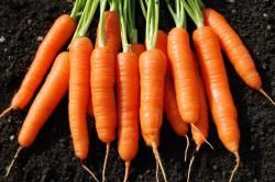 Морковь для повышения иммунитета