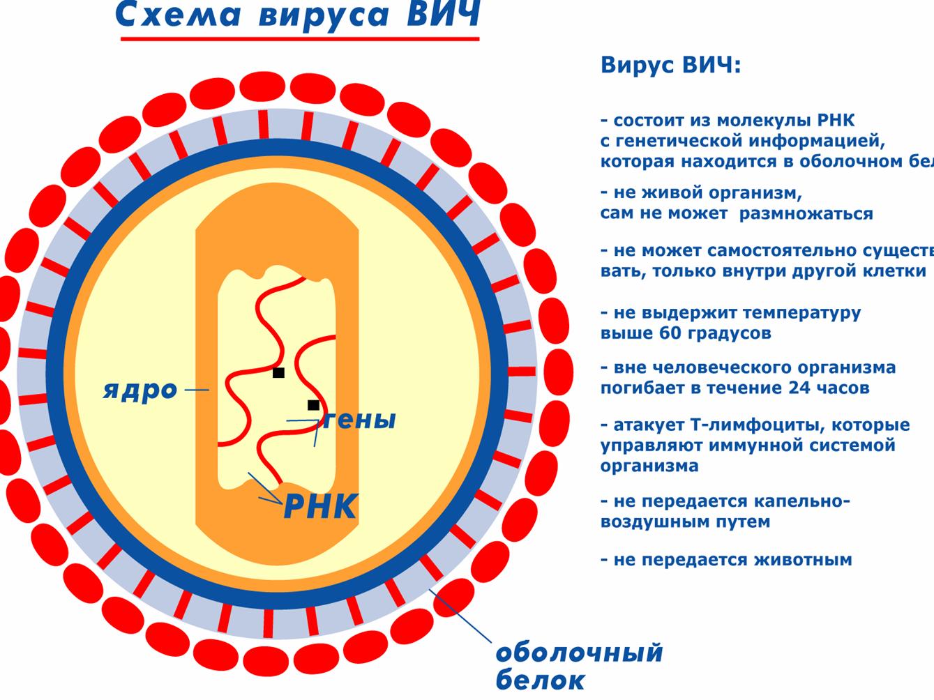 как вылечить организм от паразитов таблетки