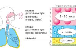 Принцип работы ингалятора при бронхиальной астме