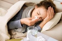Польза настойки эхинацеи при лечении гриппа