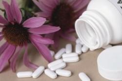 Эхинацея лекарства