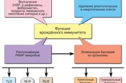 Функции иммунитета