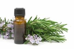 Польза эфирного масла эвкалипта при простуде