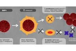 Воздействие ВИЧ на иммунную систему