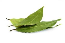 Лавровый лист при аллергии