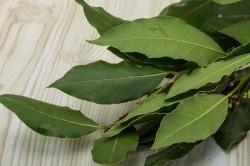 Польза лаврового листа при аллергии