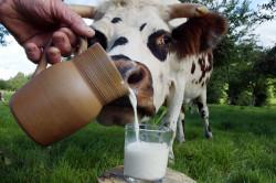 Коровье молоко - причина аллергии у детей