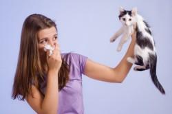 Аллергия на шерсть животных