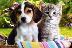 Шерсть домашних животных - одна из причин аллергии на ноге